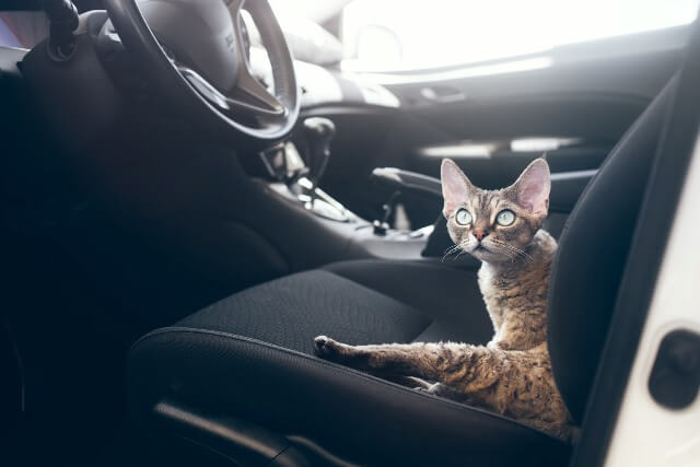 Never Abandon Cat in Car