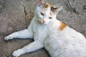Prevent Bloating to cat