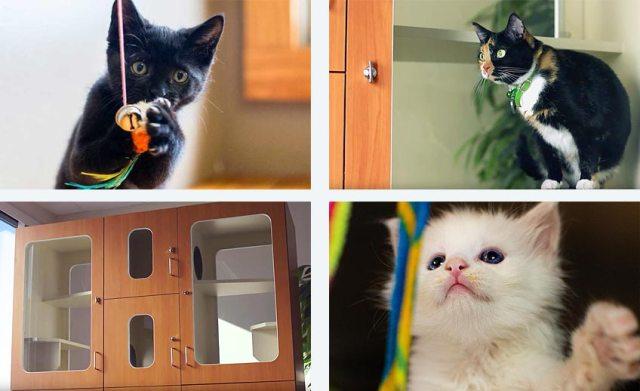 cat boarding 9