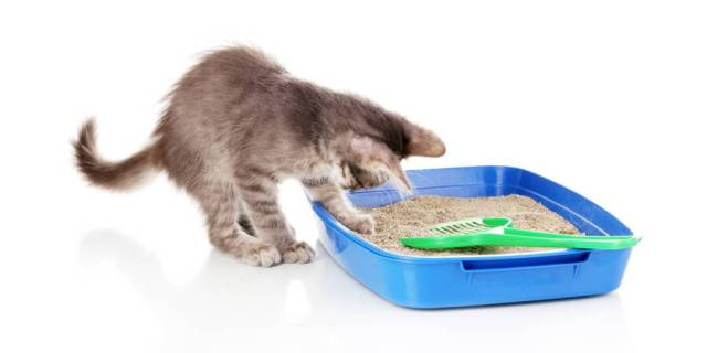 cleaning cats litter box
