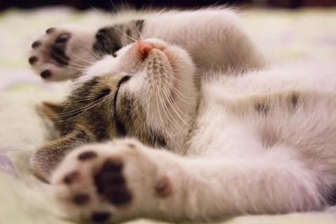 facts about cats 11