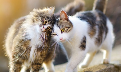 facts about cats 4