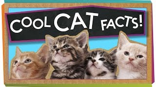 facts about cats 9
