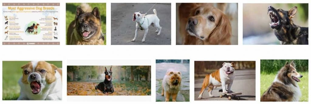 Aggressive Breeds of Dogs