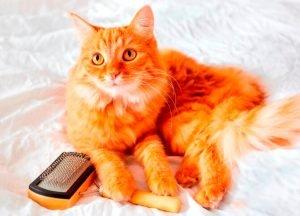 Cat Grooming Tips 1