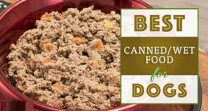 best canned dog foods 1
