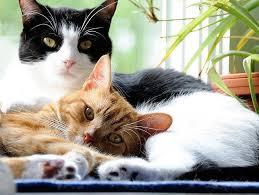 cat grooming 11