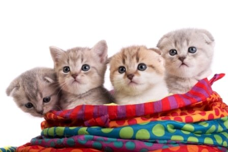 cat grooming 5