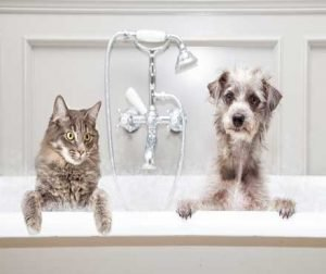 cat grooming 8