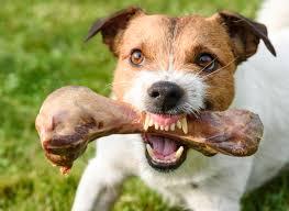 dog shows aggression