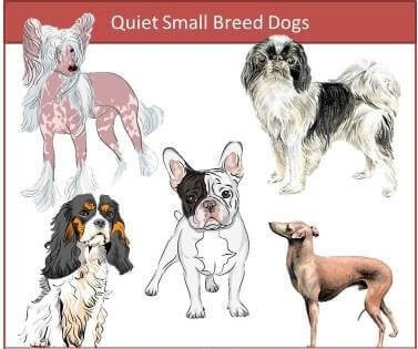 quite small dogs breeds