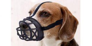 08 mayerzon dog muzzle 585x293