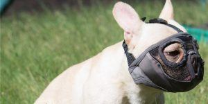 09 jyhy short snout dog muzzles 585x293