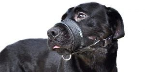 1 05 niteangel quick fit nylon dog muzzle