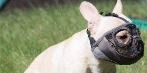 1 09 jyhy short snout dog muzzles