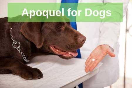 Apoquel for Dogs 6