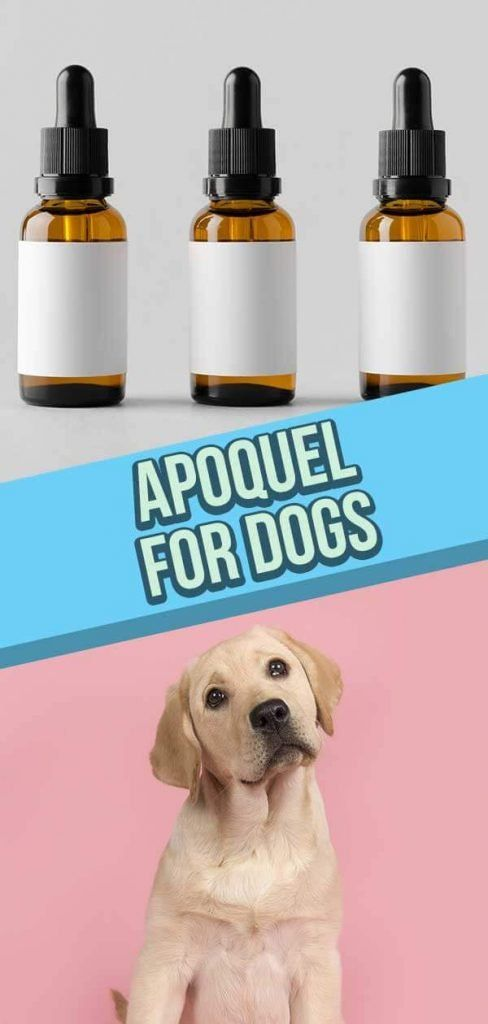 Apoquel for Dogs 8