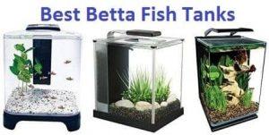 BETTA FISH TANKS 1