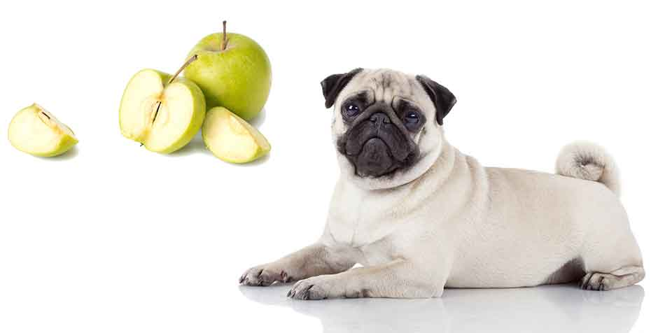 Can Dogs Eat Applesauce 11