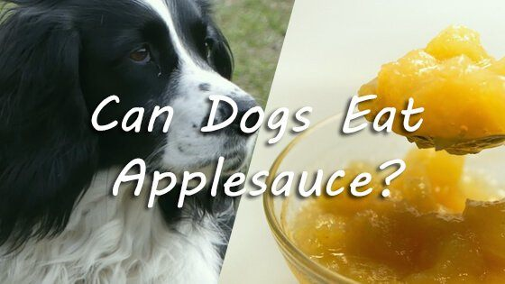 Can Dogs Eat Applesauce 13