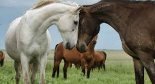 Mustang Male Horse Names