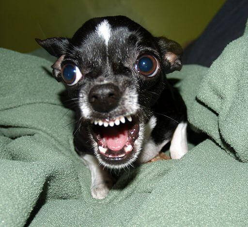Small Dog Syndrome 5