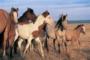 mustang female horse names 4