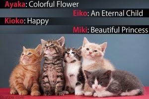 600 83454804 group of kittens