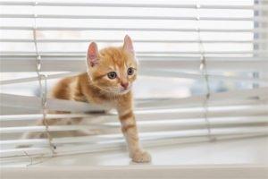 640 505015928 ginger kitten 1