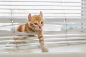640 505015928 ginger kitten