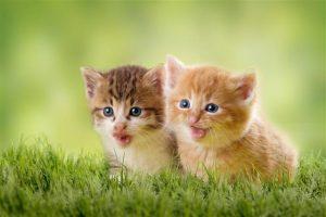 640 532851061 two kittens on green meadow