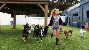 Affordable Pet Care - Safe Playtime for Pets