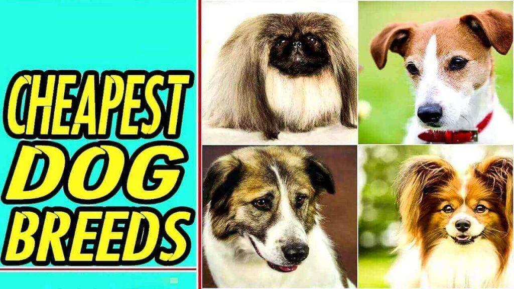 Cheaper Dog Breeds