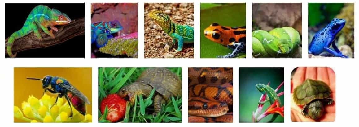 Colorful Reptiles