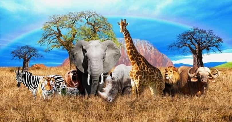 Energetic Mammals
