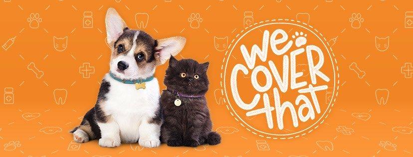 VIP Pet Care 10