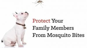 Heartworm Prevention for dogs 2