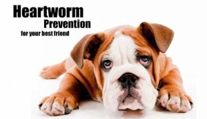 Heartworm Prevention for Dogs 4