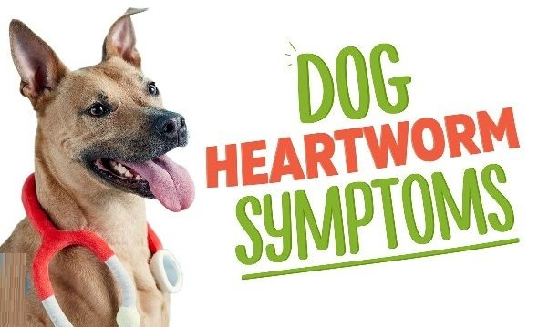 Heartworm in Dogs 6