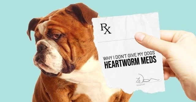 Heartworm in Dogs 7