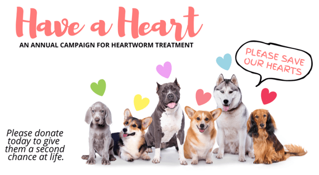 Heartworm in Dogs 8