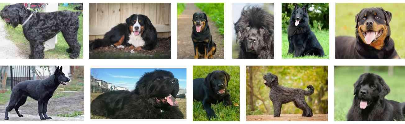 Large Black Dog Breeds