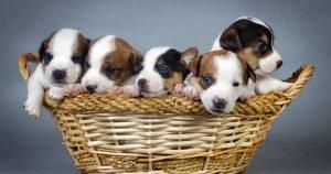 Locate Quicker Pet Growing