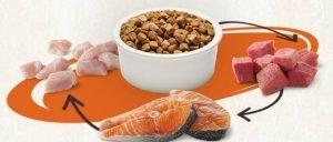 Make Your Pet Food