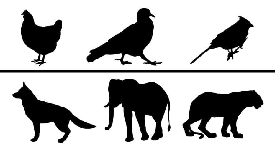 Mammals and Birds