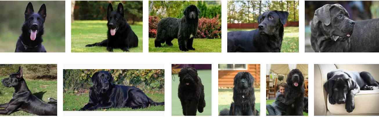 Other Black Dog Breeds