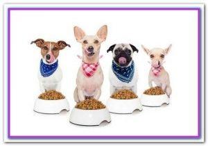 Pet Food On Sale