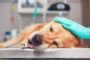Prevent Pet Health Emergencies