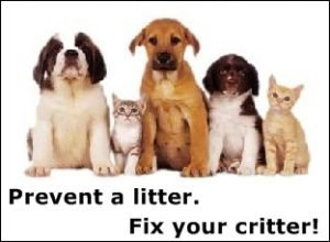 Spray And Neuter Your Pet