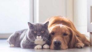 VIP Pet Care 14